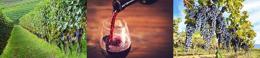 Wine Tours Romania