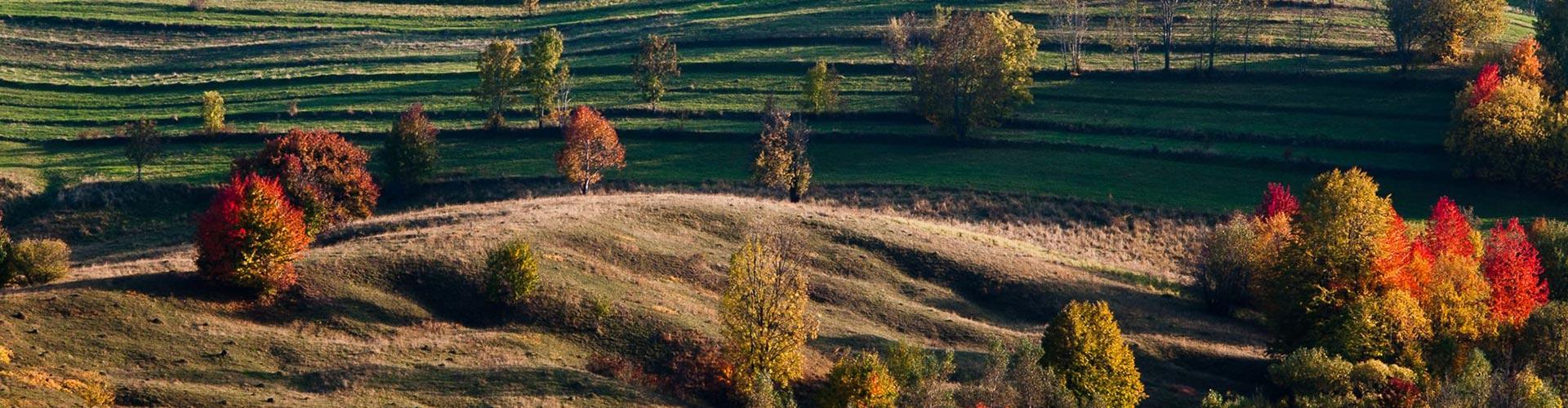 Moldavia and South Bucovina
